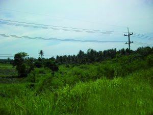 Bild Thailand Reisfeld